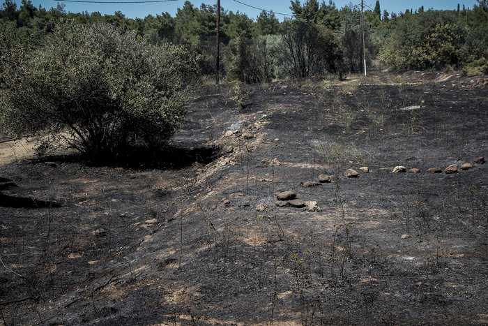 Σε εξέλιξη φωτιά στο άλσος Συγγρού: Τραυματίστηκε εθελοντής πυροσβέστης - εικόνα 2