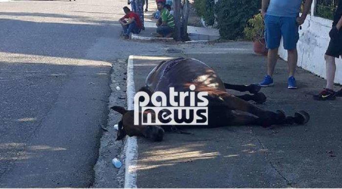 Απίστευτο τροχαίο στην Ηλεία με άλογο και 28χρονη έγκυο [φωτο]