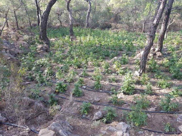 Σε εξέλιξη οι έρευνες για ιδιοκτήτες μεγάλης φυτείας κάνναβης στο Λασίθι - εικόνα 3