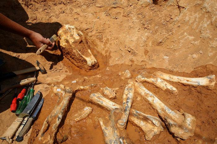 Τα οστά ενός ιππάριου, πρόγονου του σημερινού αλόγου, που ζούσε πριν από 7.200.000