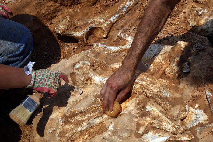 Τα οστά ενός ρινόκερου που ζούσε πριν από 7.200.000