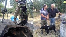 Εριξαν ζωντανό σκύλο σε πηγάδι για να το ξεφορτωθούν - Εικόνες