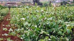 Ψευτο-υπάλληλος της ΕΥΠ έταζε επιδοτήσεις σε αγρότες με το αζημίωτο