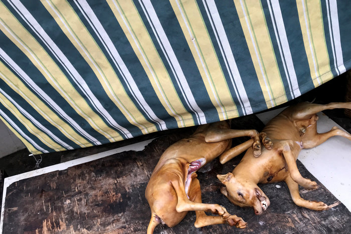 Νότια Κορέα: Παράνομη η σφαγή σκύλων για το κρέας τους - εικόνα 2