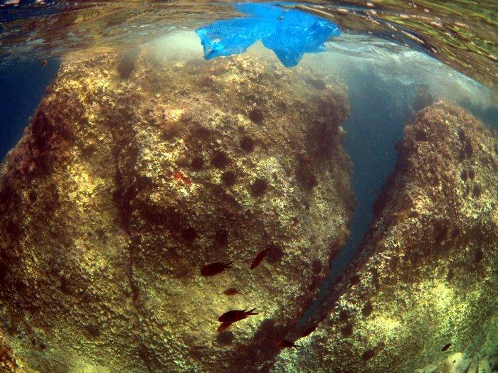 Η Μεσόγειος κινδυνεύει να μετατραπεί σε μια «πλαστική θάλασσα» - εικόνα 3