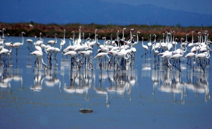 © ΑΠΕ-ΜΠΕ/Σύλλογος Προστασίας Περιβάλλοντος Κέρκυρας