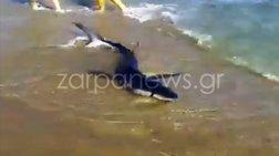 Καρχαρίας βγήκε σε παραλία των Χανίων