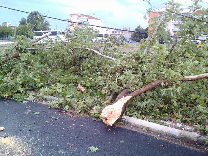 Μπουρίνι στη Λάρισα: Κολώνα της ΔΕΗ έπεσε σε αυτοκίνητο - Εικόνες - εικόνα 2