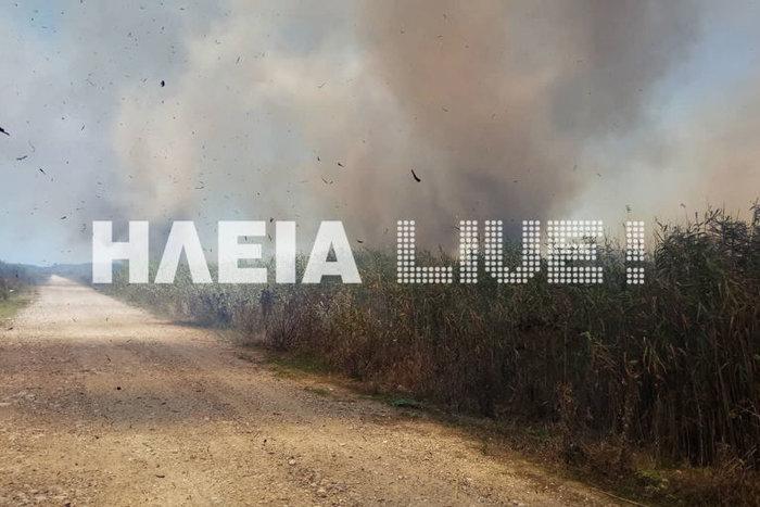 Πυρκαγιά στην περιοχή Σπιάντζα του Πύργου ΕΙΚΟΝΕΣ