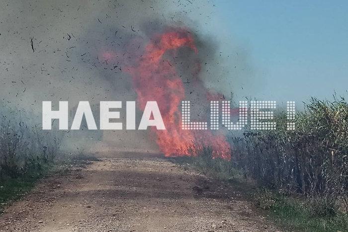 Πυρκαγιά στην περιοχή Σπιάντζα του Πύργου ΕΙΚΟΝΕΣ - εικόνα 2