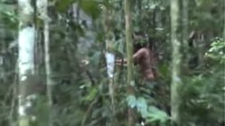 """Μόνος επιζών! Για πρώτη φορά στον φακό ο """"ιθαγενής στην τρύπα"""" (βίντεο)"""