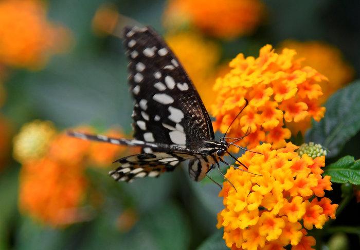 Οι πεταλούδες είναι ελεύθερες στον Ζωολογικό κήπο του Λονδίνου
