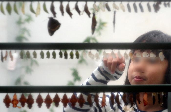 Οι πεταλούδες είναι ελεύθερες στον Ζωολογικό κήπο του Λονδίνου - εικόνα 2
