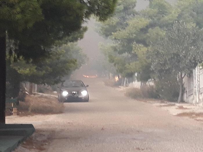 Μεγάλη φωτιά στην Κινέτα: Τέσσερα μέτωπα σε μήκος 6 χλμ - εικόνα 3