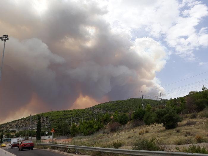 Μεγάλη φωτιά στην Κινέτα: Τέσσερα μέτωπα σε μήκος 6 χλμ - εικόνα 5