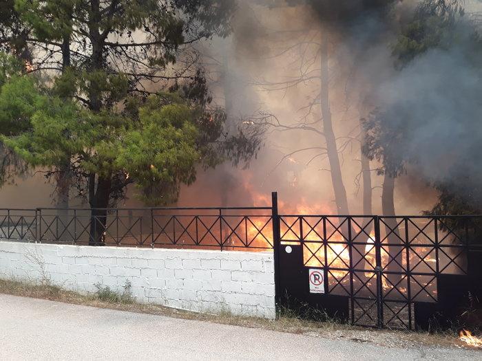 Μεγάλη φωτιά στην Κινέτα: Τέσσερα μέτωπα σε μήκος 6 χλμ - εικόνα 7