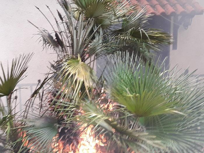 Μεγάλη φωτιά στην Κινέτα: Τέσσερα μέτωπα σε μήκος 6 χλμ - εικόνα 8