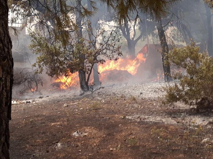 Μεγάλη φωτιά στην Κινέτα: Τέσσερα μέτωπα σε μήκος 6 χλμ - εικόνα 9