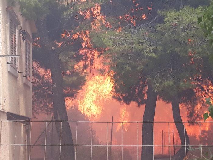 Μεγάλη φωτιά στην Κινέτα: Τέσσερα μέτωπα σε μήκος 6 χλμ - εικόνα 15