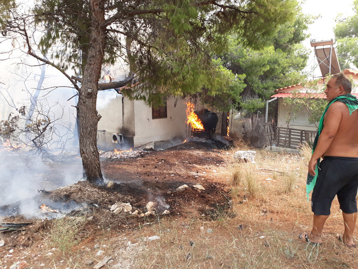 Μεγάλη φωτιά στην Κινέτα: Τέσσερα μέτωπα σε μήκος 6 χλμ - εικόνα 16