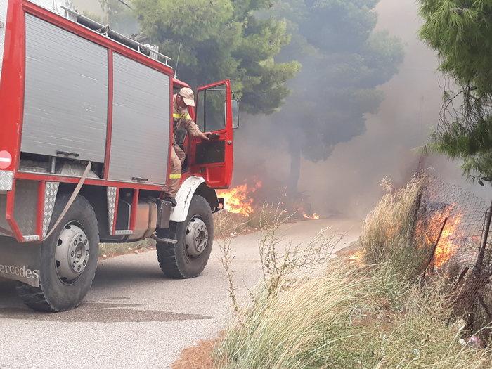 Μεγάλη φωτιά στην Κινέτα: Τέσσερα μέτωπα σε μήκος 6 χλμ - εικόνα 17