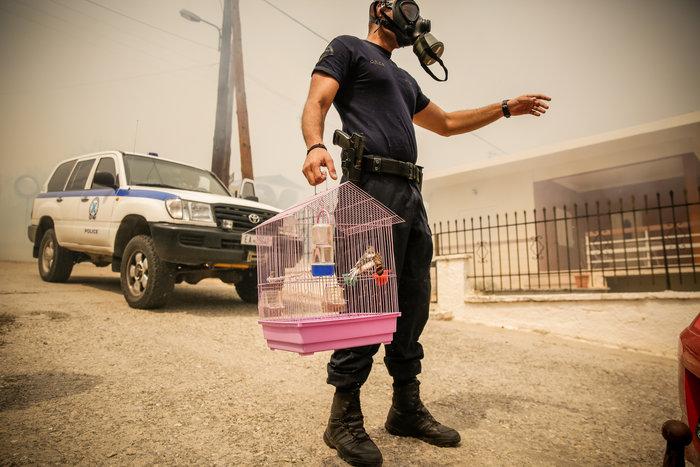 Πυρκαγιά στην Κινέτα: Η ανθρωπιά σε 3 συγκλονιστικές εικόνες - εικόνα 2