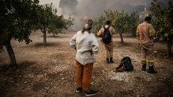 Αλεξανδρούπολη: Σε εξέλιξη πυρκαγιά σε πευκοδάσος στην περιοχή της Λευκίμης