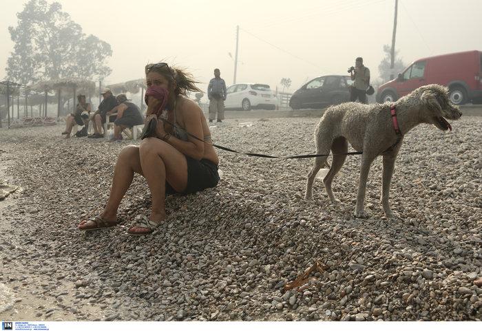Βρήκαν καταφύγιο στην παραλία της Κινέτας