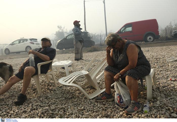 Βρήκαν καταφύγιο στην παραλία της Κινέτας - εικόνα 2