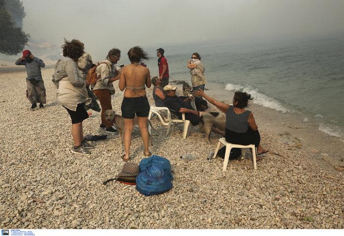 Βρήκαν καταφύγιο στην παραλία της Κινέτας - εικόνα 3