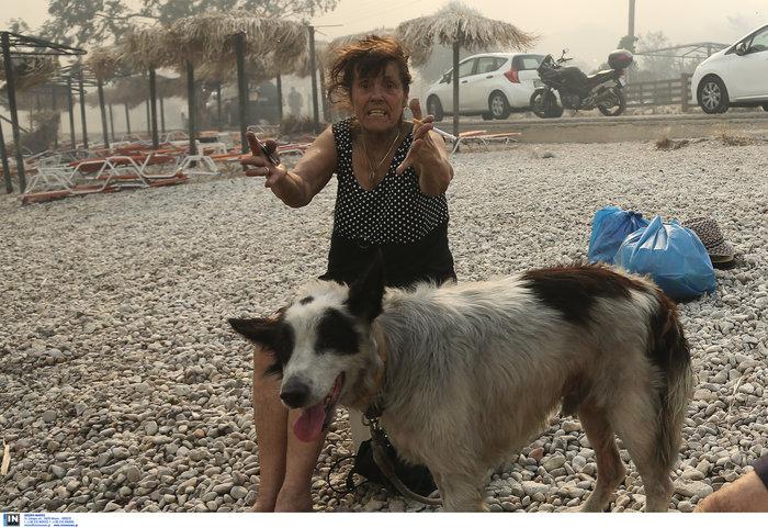 Βρήκαν καταφύγιο στην παραλία της Κινέτας - εικόνα 4