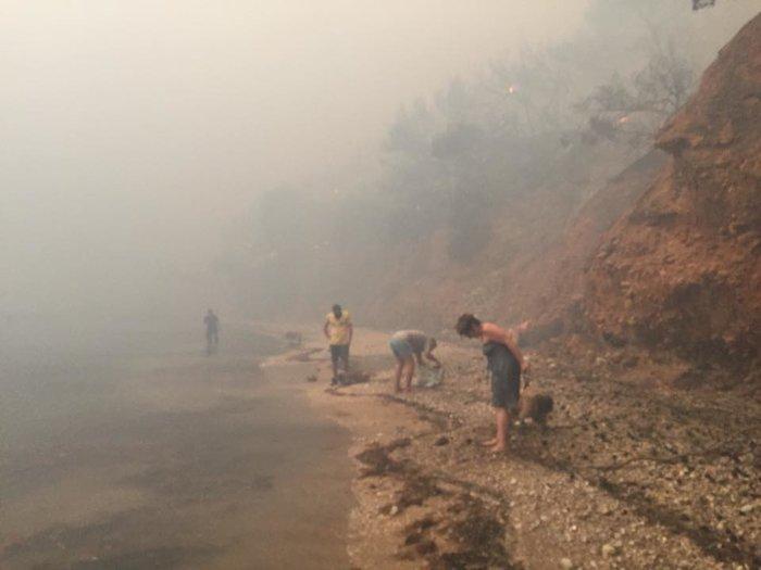 Σκηνές αποκάλυψης στις παραλίες της Ραφήνας με τη φωτιά - εικόνα 3