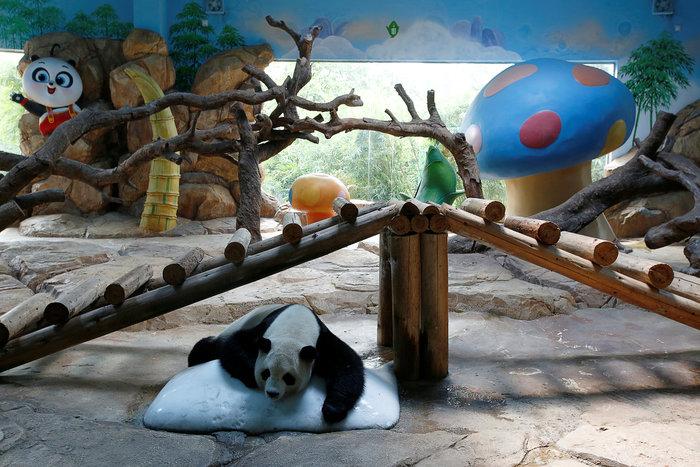 Πάρτι γενεθλίων για τα μοναδικά γιγαντιαία τρίδυμα panda στον κόσμο! - εικόνα 9