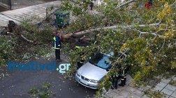 Θεσσαλονίκη: Ισχυρή βροχόπτωση και πτώσεις δέντρων