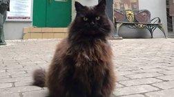Έκλεψαν γάτο - μασκότ από μουσείο στη Μόσχα