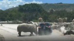 Επίθεση ρινόκερου σε αυτοκίνητο σε πάρκο άγριων ζώων (βίντεο)