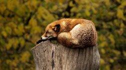 Νέα έρευνα: Επικίνδυνος ο ύπνος πάνω από οκτώ ώρες την ημέρα;