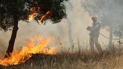 Σε εξέλιξη φωτιά στην περιοχή Διάσελλα στην Ηλεία - Εικόνες