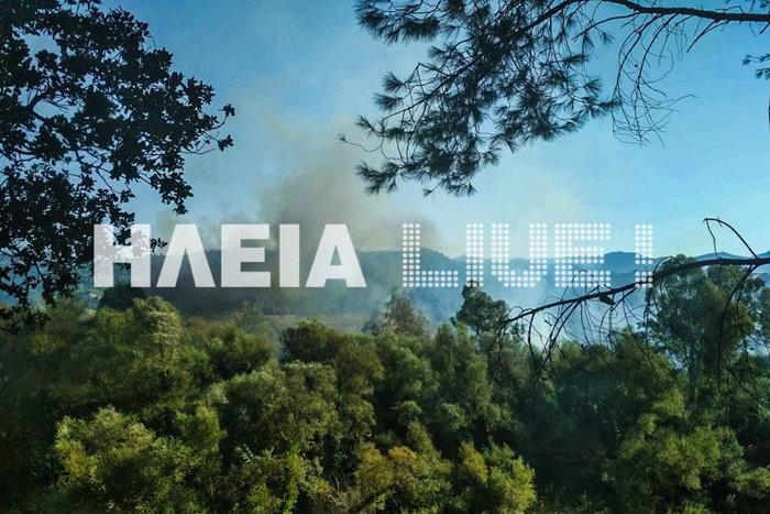 Σε εξέλιξη φωτιά στην περιοχή Διάσελλα στην Ηλεία - Εικόνες - εικόνα 4