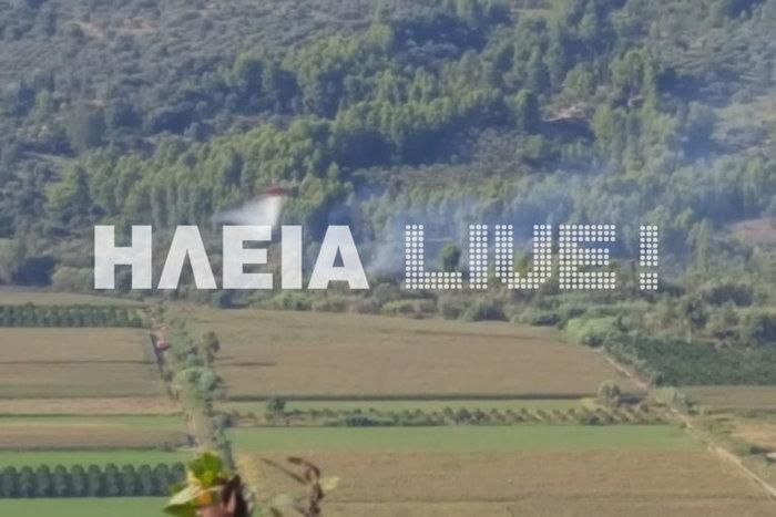 Σε εξέλιξη φωτιά στην περιοχή Διάσελλα στην Ηλεία - Εικόνες - εικόνα 2