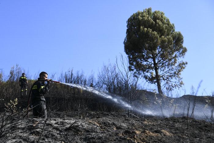 Παραμένουν στον Αγιο Στέφανο οι δυνάμεις της Πυροσβεστικής - Εικόνες - εικόνα 2