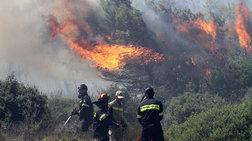 Πύργος: Υπό μερικό έλεγχο φωτιά στο Λαμπέτι Ηλείας