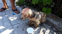 Πρόστιμο 30.000 ευρώ σε 62χρονο που περιέλουσε σκυλάκι με πετρέλαιο
