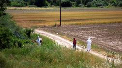 Στειρώνουν τα κουνούπια «τίγρης» στη Βραυρώνα