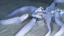 Τρία νέα θαλάσσια είδη ανακαλύφθηκαν στον Ειρηνικό