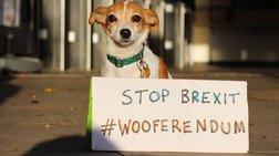 wooferendum-oi-skuloi-tis-bretanias-diadilwnoun-kata-tou-brexit