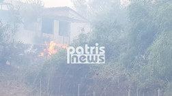 Ηλεία: Οριοθετήθηκε η πυρκαγιά - Μικρές ζημιές