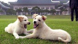 Ο Κιμ έστειλε δώρο δύο λευκά κυνηγόσκυλα στον ηγέτη της Νότιας Κορέας