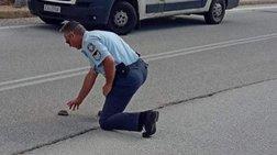 Αστυνομικός στην Καστοριά βοήθησε χελωνάκι να περάσει το δρόμο (φωτό)