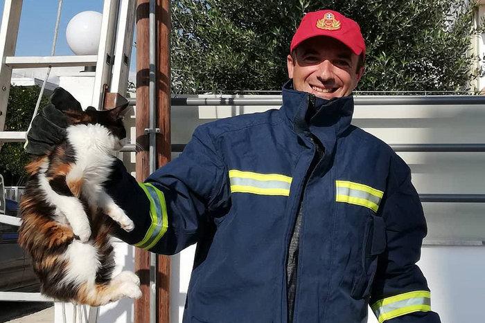 Καρέ καρέ η διάσωση της άτακτης γάτας στην Αργολίδα - εικόνα 5